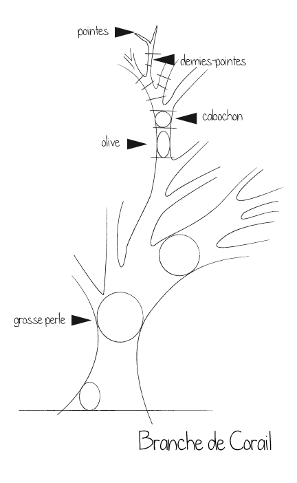 Branche de Corail méditerranéen